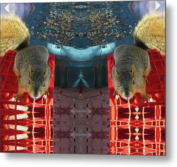 Hungry Squirrels Demanding Sunflower Seeds Metal Print