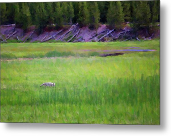 Metal Print featuring the photograph Hunting by Sue Collura