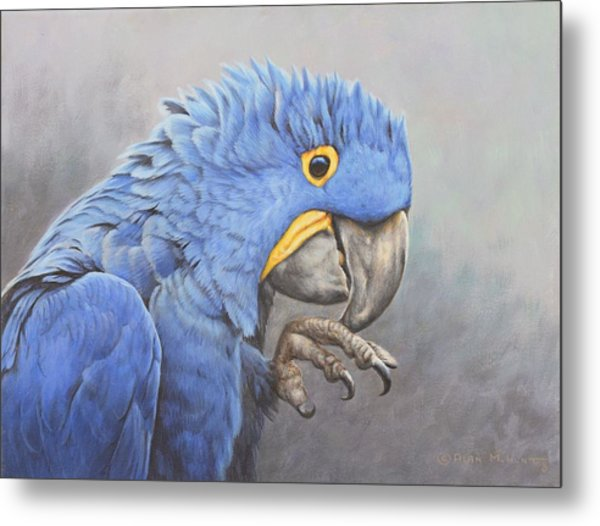 Metal Print featuring the painting Hyacinth Macaw by Alan M Hunt