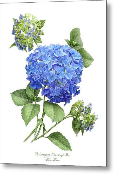Hydrangea Blue Wave Metal Print