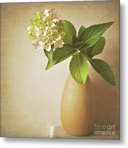 Hydrangea With Leaves Metal Print