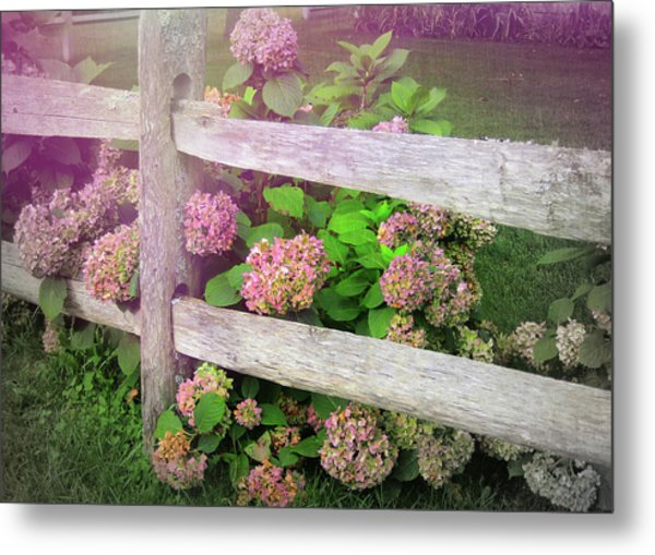 Hydrangeas Metal Print by JAMART Photography