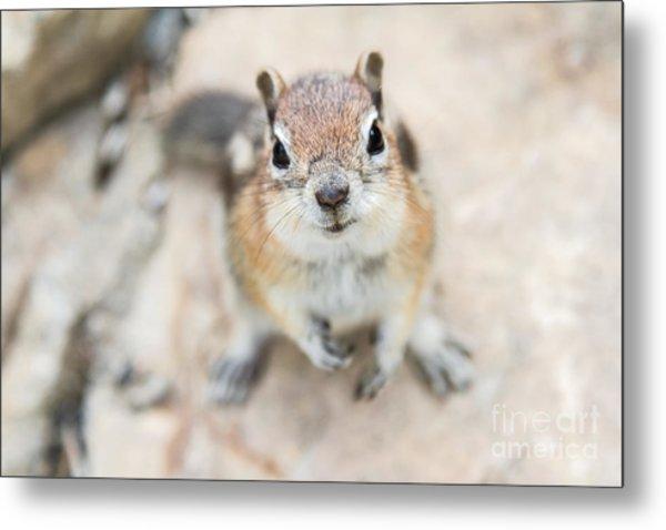Hypno Squirrel Metal Print