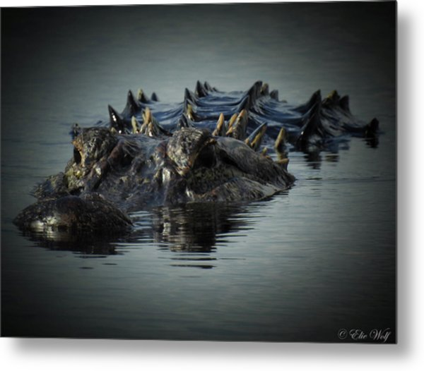 I Am Gator, No. 45 Metal Print