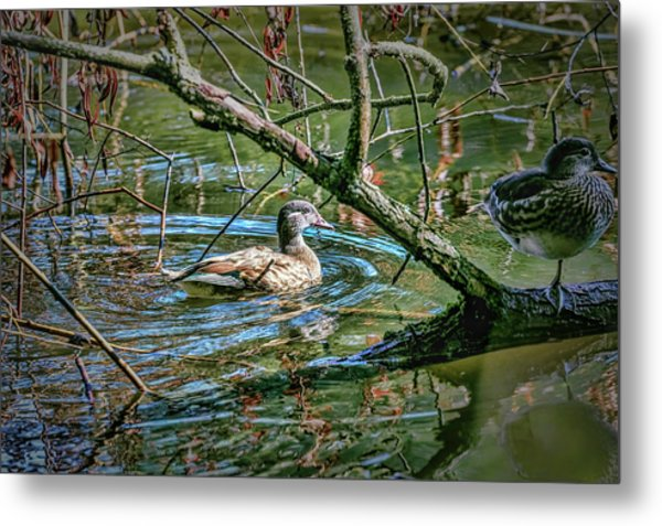 Metal Print featuring the photograph I Am Pritty #h9 by Leif Sohlman