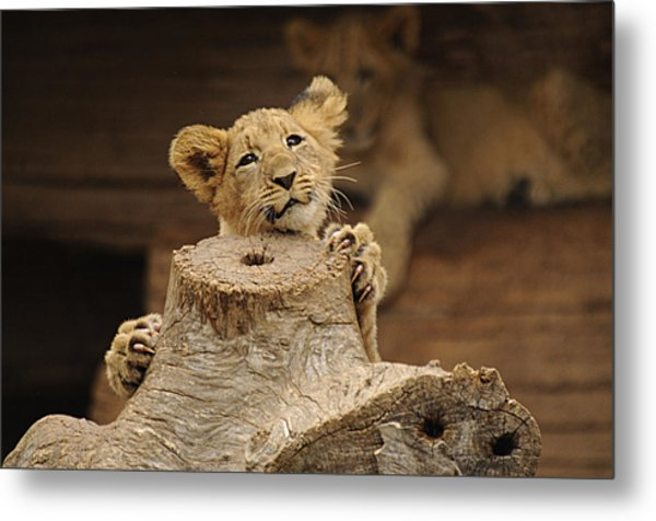 I Can Do This Metal Print by Keith Lovejoy
