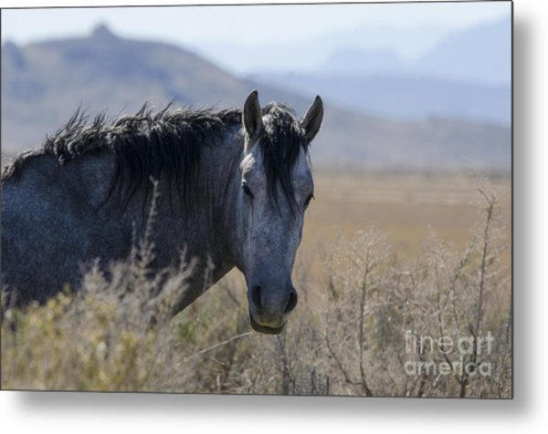 I Can See You Metal Print by Nicole Markmann Nelson