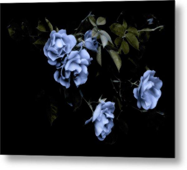 I Dream Of Roses Metal Print
