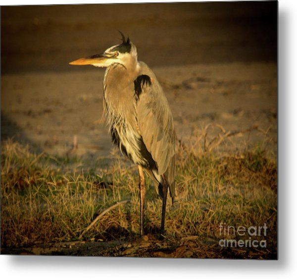 I Know They Are Coming Wildlife Art By Kaylyn Franks Metal Print