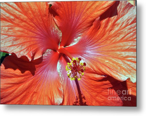 I Love Orange Flowers 2 Metal Print