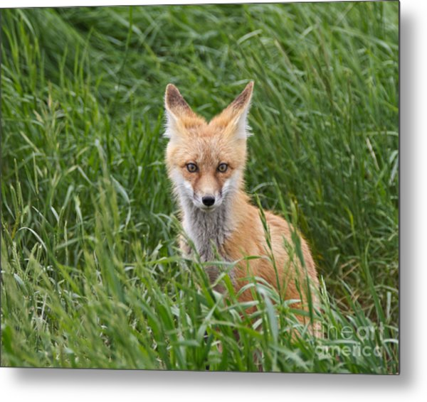 I See You Metal Print by Royce Howland