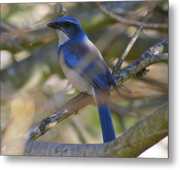 I Think I Found The Blue Bird Of Happiness Metal Print by Kerry Reed