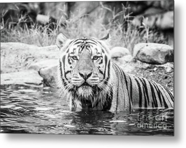 I Want To Play - Bw Metal Print