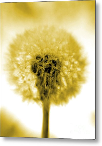 I Wish In Yellow Gold Metal Print by Valerie Fuqua