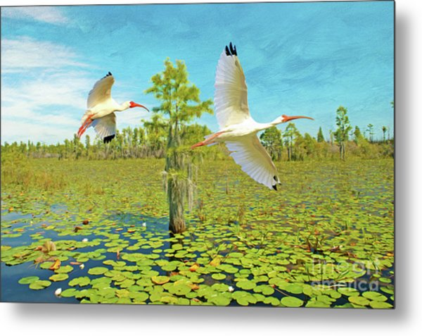 Ibis At Okefenokee Metal Print