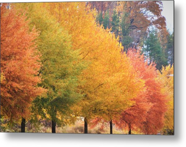 October Trees Metal Print