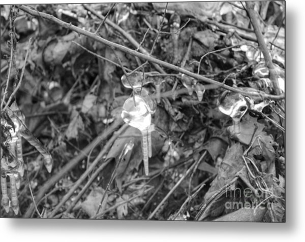Ice Crystal In January Metal Print