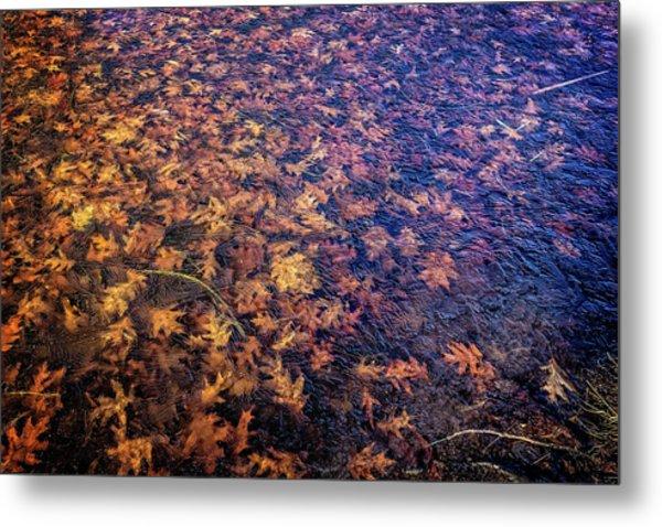 Ice On Oak Leaves Metal Print