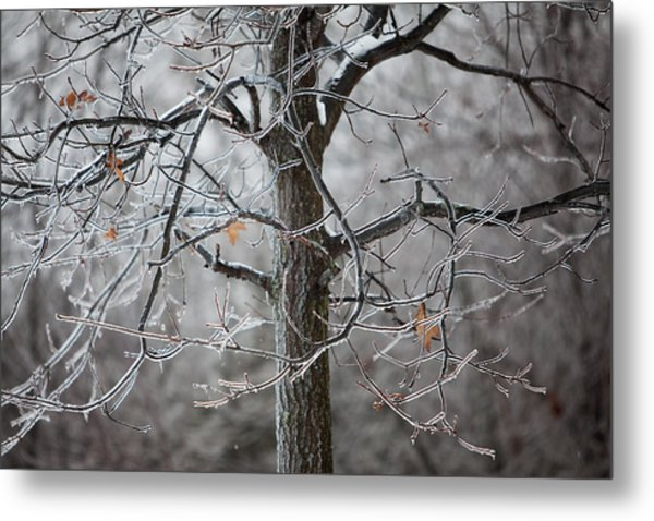 Ice Tree Metal Print