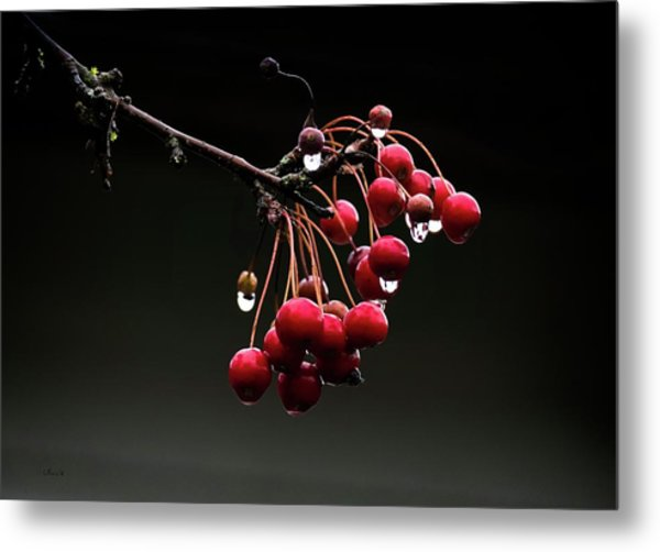 Iced Crab Apples Metal Print