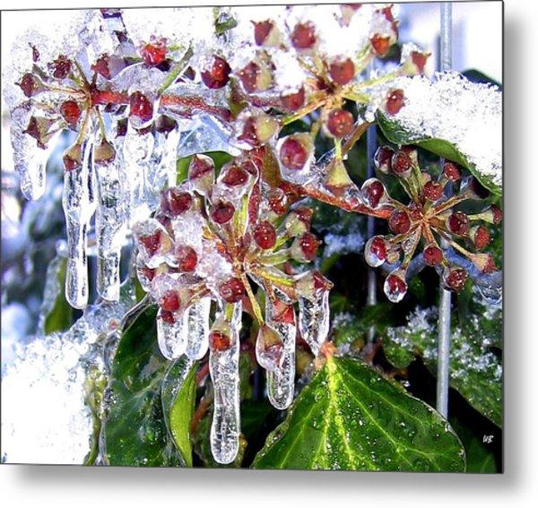 Iced Ivy Metal Print