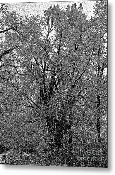 Iced Tree Metal Print