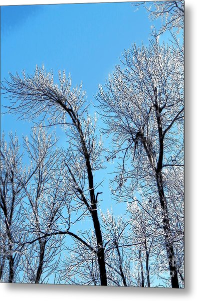Iced Trees Metal Print