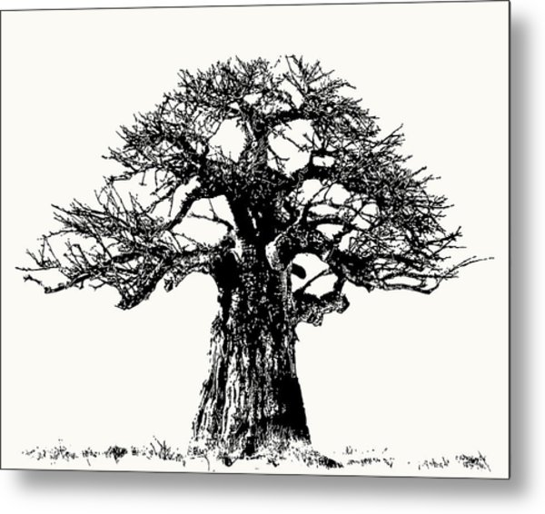 Iconic Baobab Tree In Black And White Metal Print