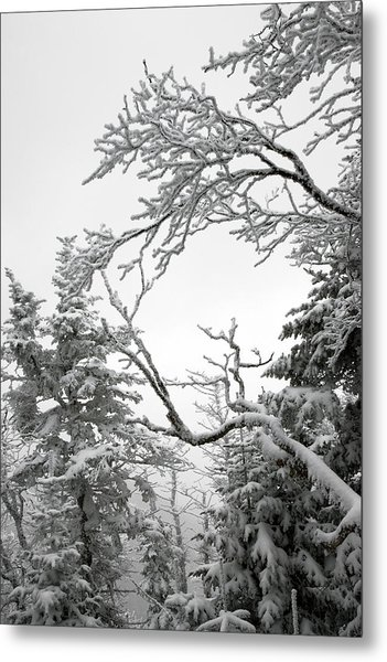 Icy Branches In The Adirondack Mountains Of New York Metal Print by Brendan Reals