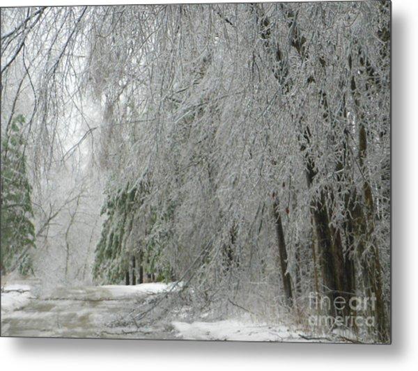 Icy Street Trees Metal Print