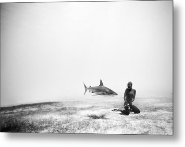 If Sharks Could Fly Metal Print by One ocean One breath