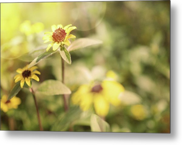 Illuminated Zinnia Metal Print