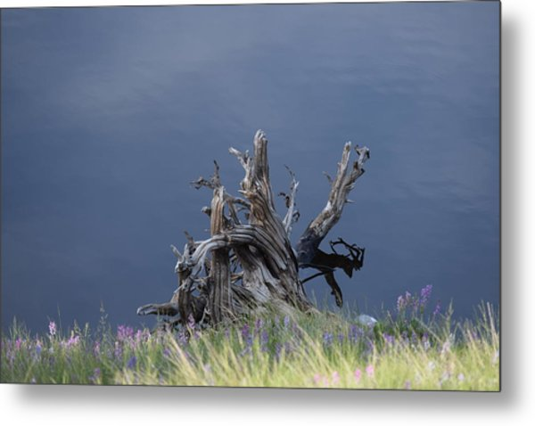 Stump Chambers Lake Hwy 14 Co Metal Print