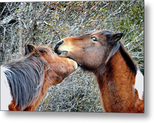 I'm The Boss Says Patricia Irene To April Star Metal Print