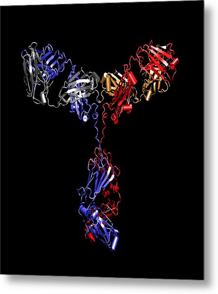 Immunoglobulin G Antibody Metal Print by Dr Tim Evans