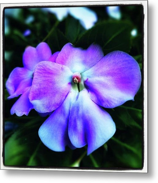 Metal Print featuring the photograph Impatiens. Also Known As our Lady's by Mr Photojimsf