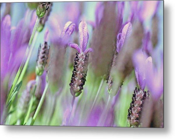 Impressionist Lavender Metal Print