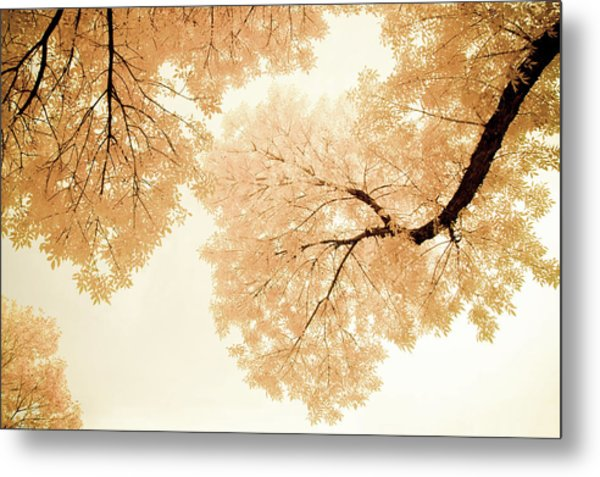Impressions Of October Metal Print
