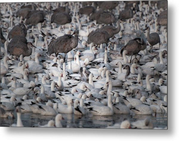 Metal Print featuring the photograph In A Crowd - The Bosque by Britt Runyon