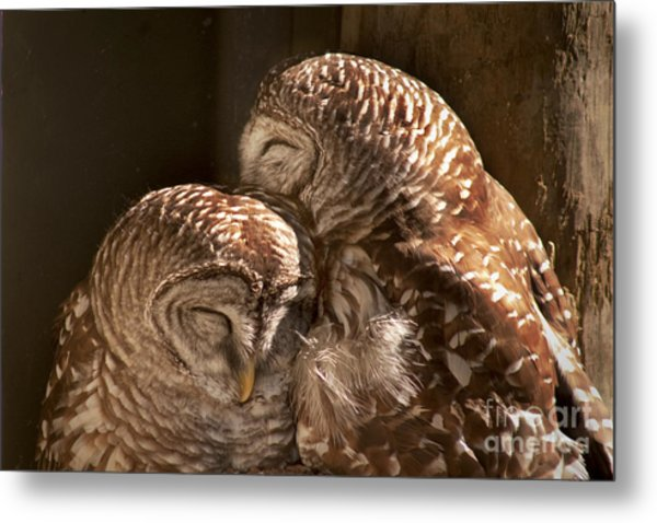 In Cohoots Metal Print by John Hartung