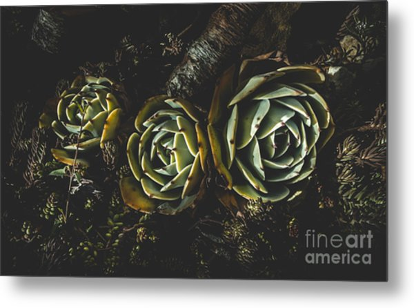 In Dark Bloom Metal Print