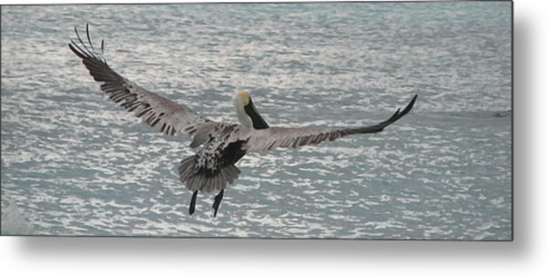 In Flight Metal Print by Ginger Howland