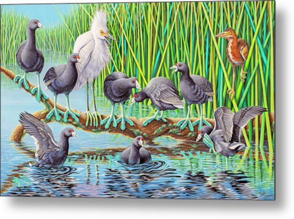 in Kahoots with Coots Metal Print