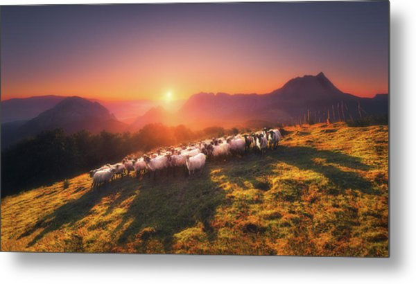 In Saibi With Companionsheep Metal Print