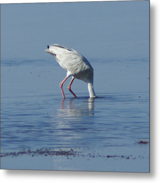 In Search Of Metal Print by Debbie May
