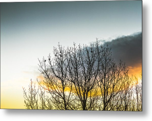 In Silhouette Of Birds And Twigs Metal Print