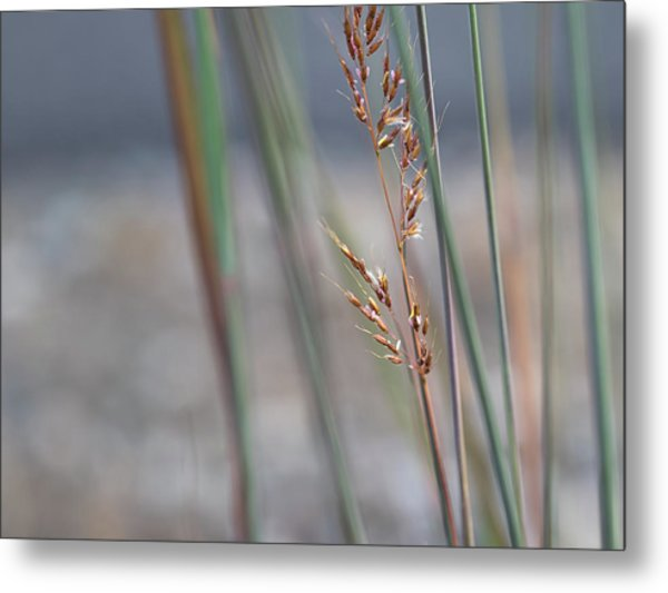 In The Company Of Blue - Metal Print
