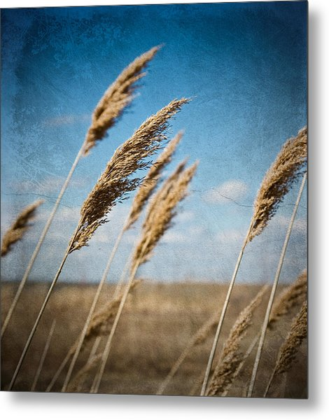 In The Field Metal Print by Michel Filion