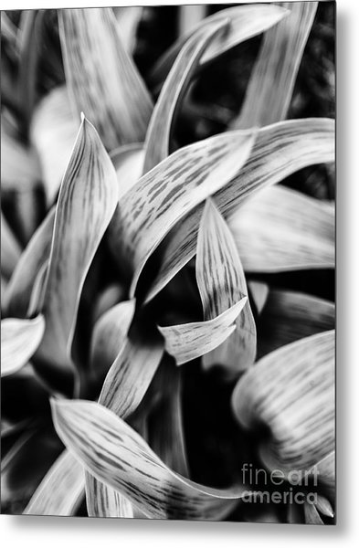 In The Garden _ Tulip Leaves Metal Print