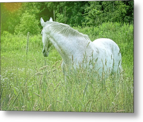 In The Meadow Metal Print by JAMART Photography